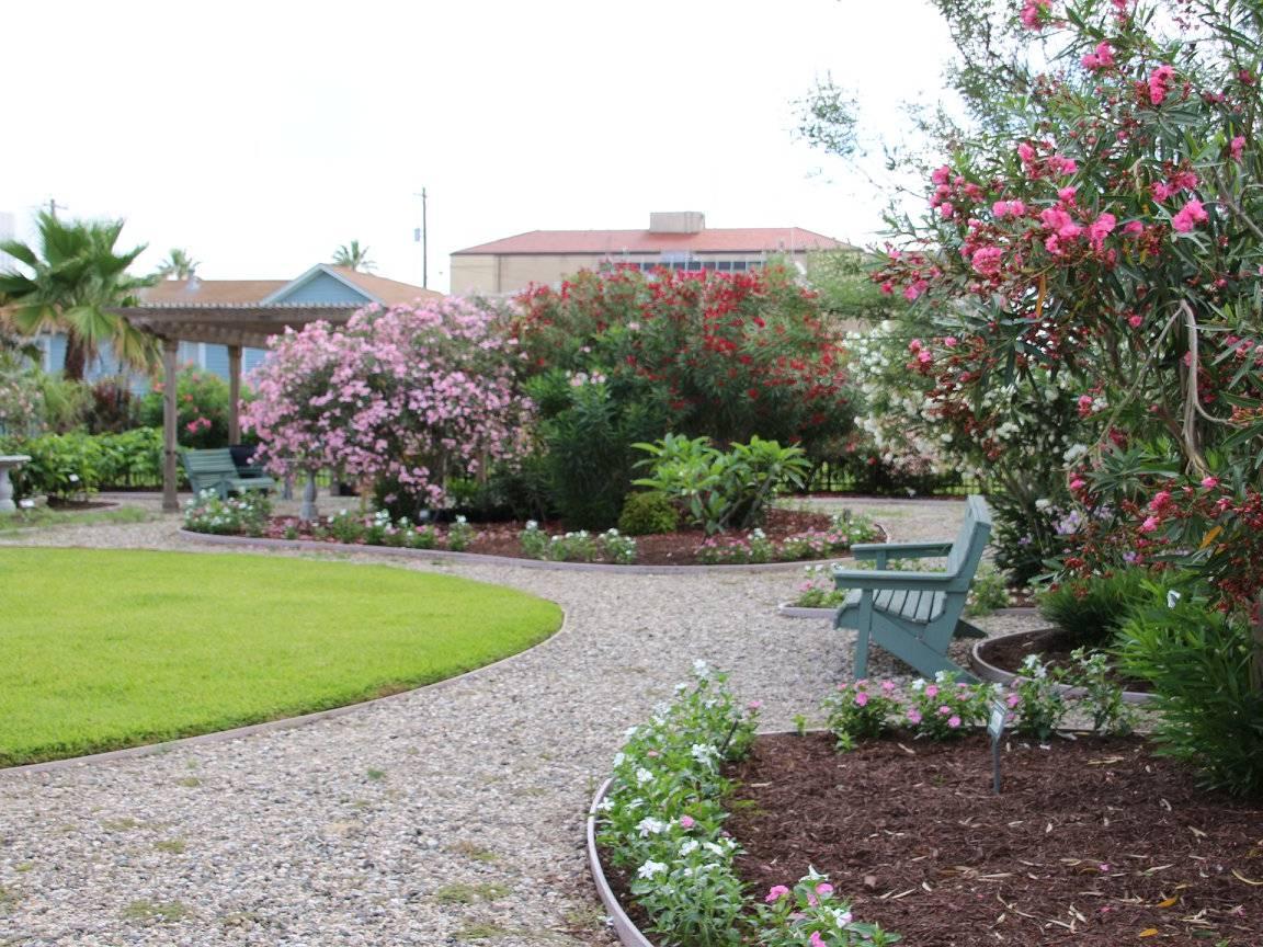 International Oleander Society