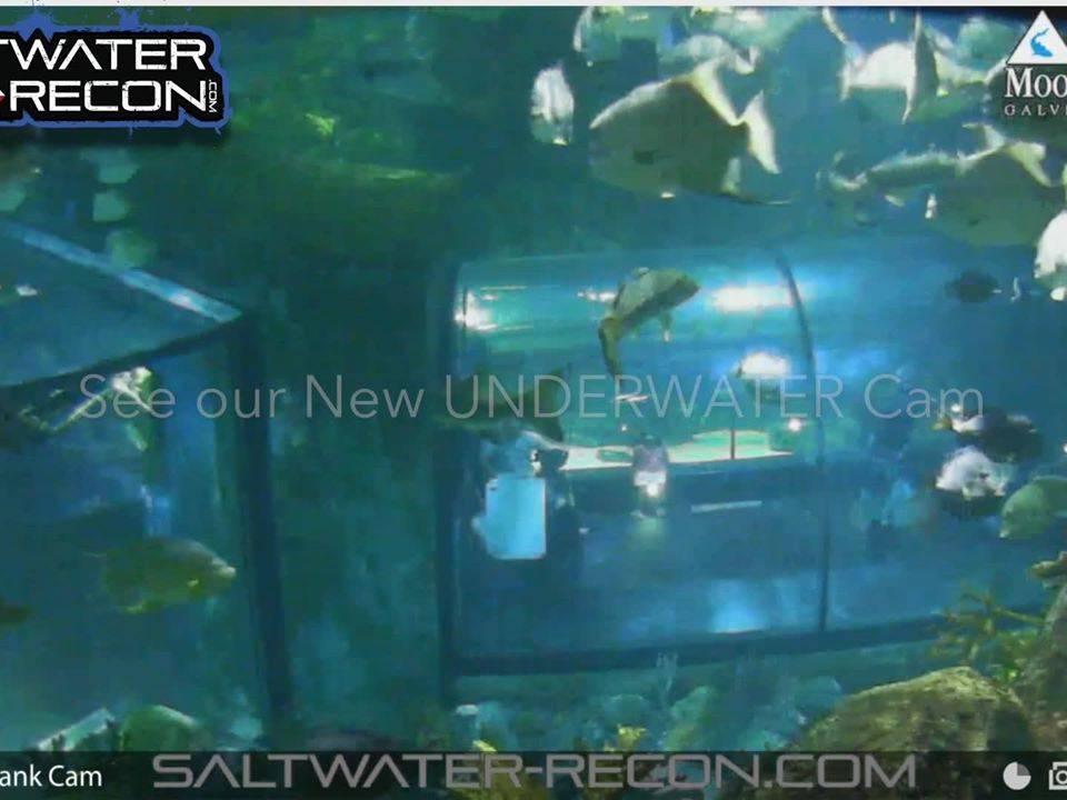 Saltwater-Recon