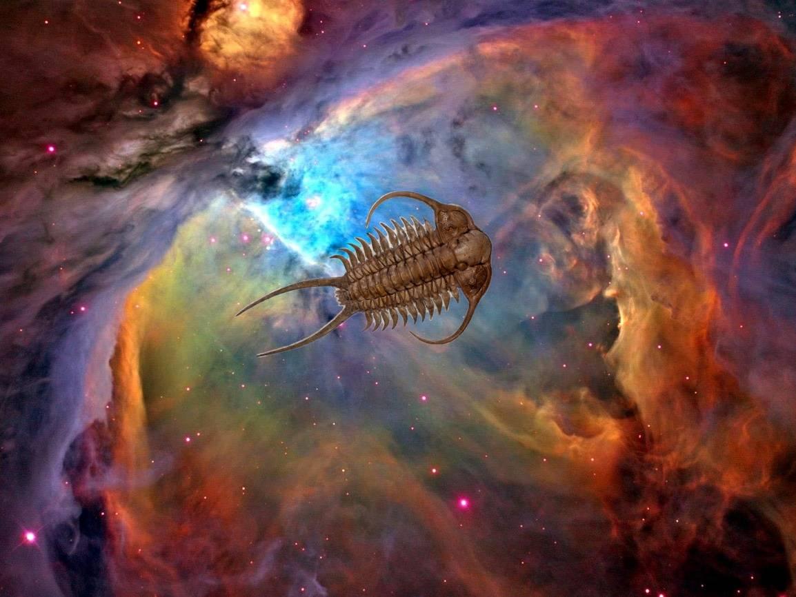 Fossil Galaxy Gallery