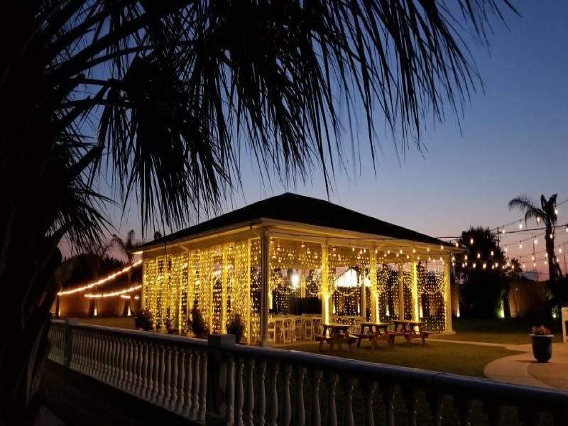 Galveston Island Palms